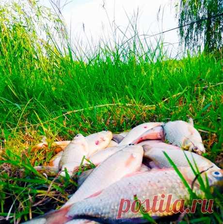 Проверенная временем начинка для «пружин» и «сосок» ловит, ловит и ловит | Рыбалка с дядей Сашей | Яндекс Дзен