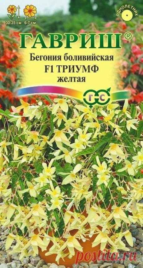 """Бегония боливийская """"F1 Триумф"""", желтая, гранулированная"""