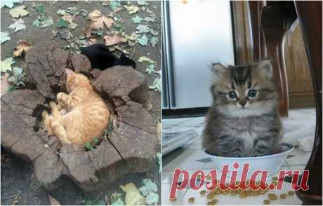 20 неопровержимых доказательств, что кошки поместятся где угодно  Любимые места для отдыха представителей кошачьего племени.К этому факту можно относится с сомнением, но, всё же, кошки - это такие создания, которые способны поместиться где угодно. Иногда это кажетс…