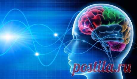 Может ли в мозге человека закончиться память? Любую информацию можно измерить и посчитать, сколько «места» она занимает