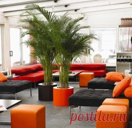 Разновидности комнатной пальмы: какую выбрать домашнюю пальму для декора помещения