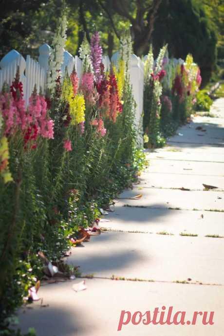 5 лучших растений для посадки с уличной стороны забора — Садоводка