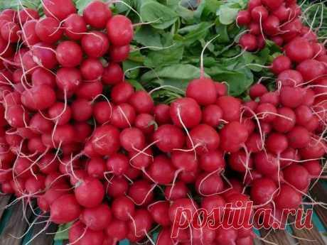 Выращивайте редис только так. | Записки садовода | Яндекс Дзен