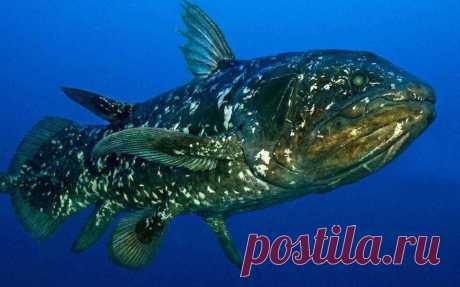 В водах Мадагаскара обнаружили рыб, которые «видели» динозавров   Живой мир - природа