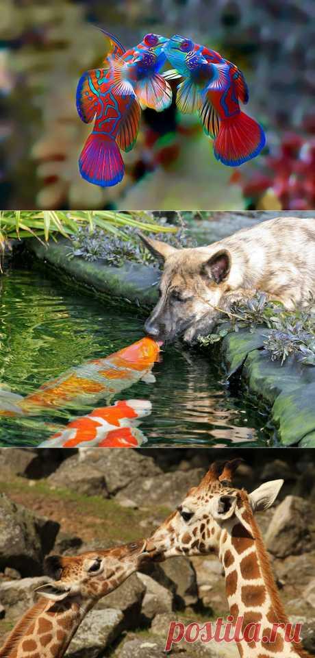 Как животные проявляют чувства. Красивые фотографии животных | Newpix.ru - позитивный интернет-журнал