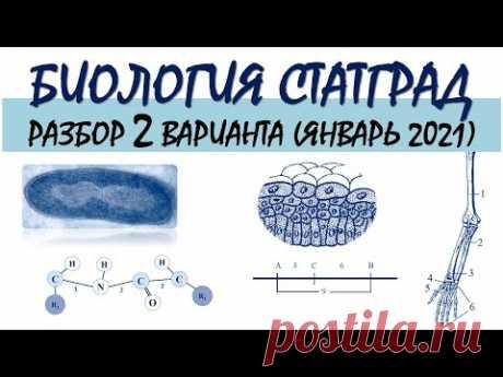 СТАТГРАД БИОЛОГИЯ   2 вариант   Январь 2021