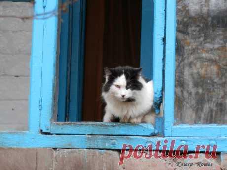 Да живу я здесь! 🐱 Кот-разведчик. 😼 Хорошая машина. 😺 - фотогалерея - Городские коты очень умны и изобретательны. Для них нет никаких преград и нет ни одного места, куда бы они не залезли, если вдруг им пришла такая охота. Кстати, об охоте. Охотятся котики отнюдь не на мышей. Да и где их искать, этих самых мышей? Котов во дворе больше, чем их...  Эпизод 7. Да живу я здесь! 🐱 Эпизод 8. Кот-разведчик. 😼 Эпизод 9. Хорошая машина. 😺