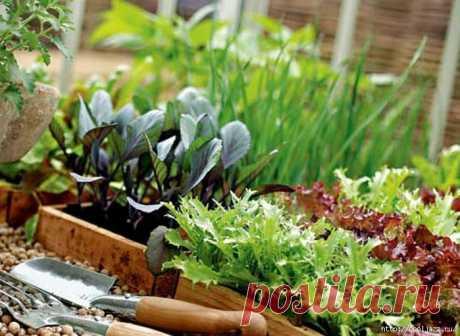 Выращиваем травы на подоконнике.