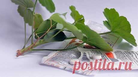 Как использовать янтарную кислоту для домашних растений