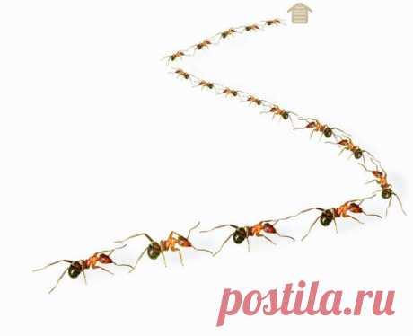 (+1) - Sos и снова муравьи | 6 соток
