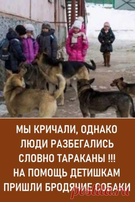 Мы кричали, однако люди разбегались, словно тараканы!!! На помощь детишкам пришли бродячие собаки. Услышав такую историю, поневоле задумаешься о том, что многие животные гораздо более человечны, чем некоторые люди…