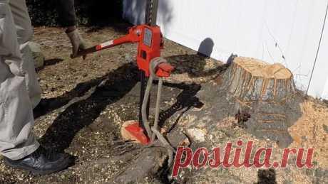 Способы, с помощью которых можно незаметно уничтожить на даче соседское дерево и его корневые части | ЯСТРОИТЕЛЬ | Яндекс Дзен