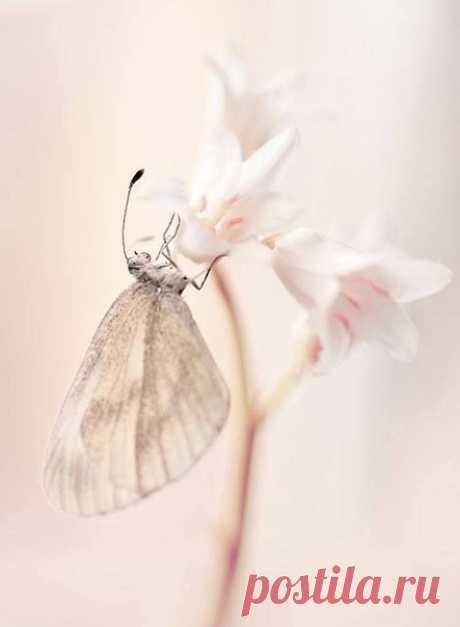 ...Я так хочу, чтоб жизнь была светлее, Сияли счастьем сердце и глаза, И люди стали чуточку добрее, И научились верить в чудеса!  © Светлана Чеколаева