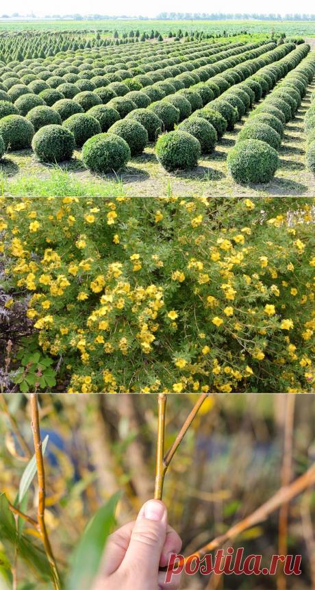 Обрезка кустарников: необходимая часть ухода за растениями