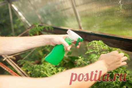 Как поливать рассаду перекисью водорода в домашних условиях: пропорции, отзывы