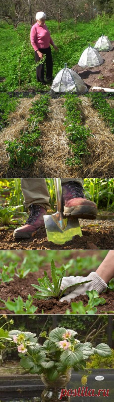 Огород без хлопот: советы Галины Кизимы, не поливать, не копать, не полоть, фото, видео