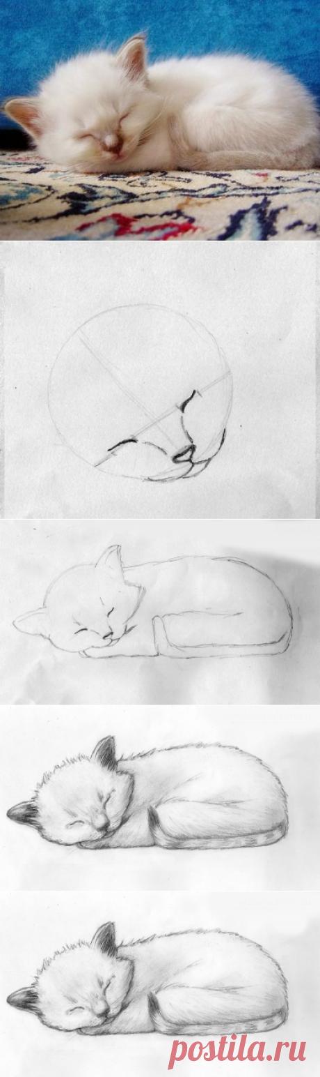 Рисуем милого котёнка — Сделай сам, идеи для творчества - DIY Ideas
