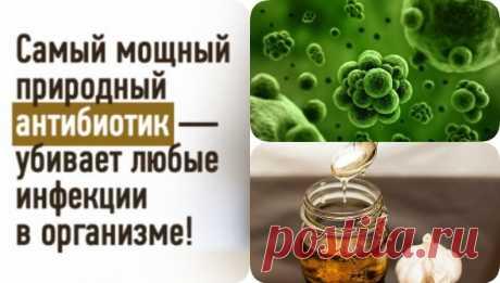 Мощная настойка-антибиотик, убивающая все инфекции в организме. Рецепт американского врача - interesno.win Этот рецепт один из наиболее эффективных природных антибиотиков, который успешно лечит практически...