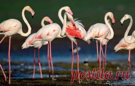 Почему фламинго стоят на одной ноге - Поздравления.тк - Поздравления и пожелания в стихах