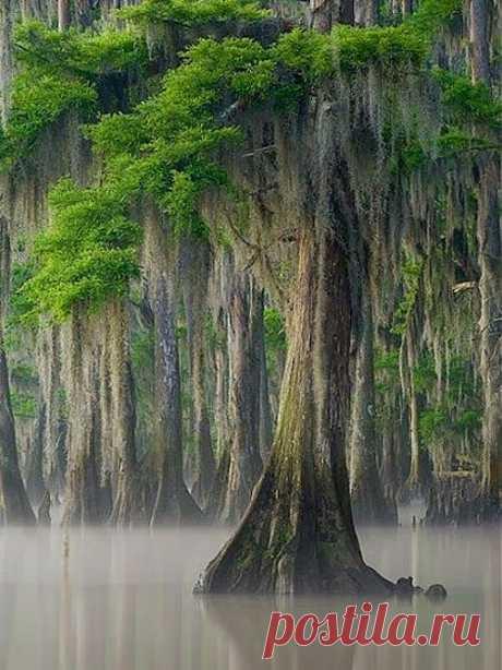 легенда о дереве
