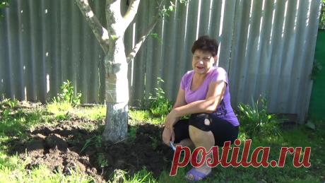 Простое средство от муравьев на деревьях | Любимая усадьба | Яндекс Дзен