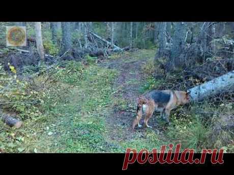 Природа. Прогулка по лесу, к реке. 8 сентября.