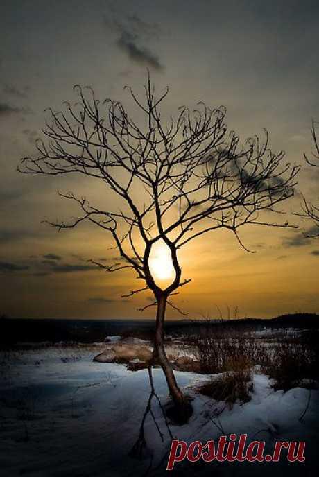 ~~The Eye by Erik Lewandowski~~ | Tree & Path