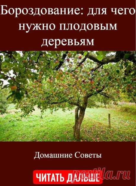 Бороздование: для чего нужно плодовым деревьям