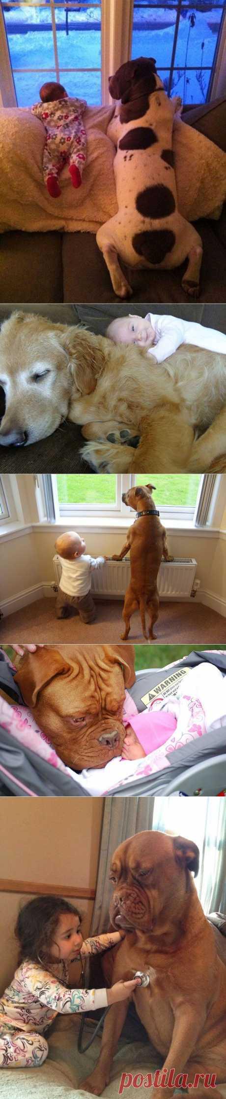 Маленькие дети и их большие собаки | Уши, лапы, хвост