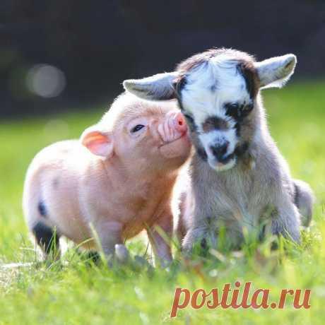 Что выгоднее держать на сельском подворье. | Yulia L. | Яндекс Дзен