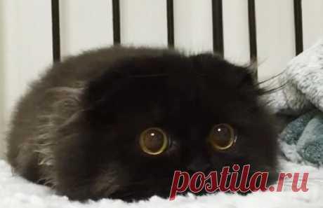 30 фото забавных котят, от которых невозможно оторваться