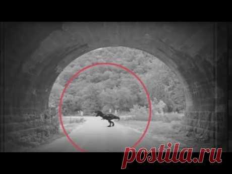 """ТОП 5 """"РЕАЛЬНО"""" СНЯТЫХ ДИНОЗАВРОВ НА КАМЕРУ - YouTube"""