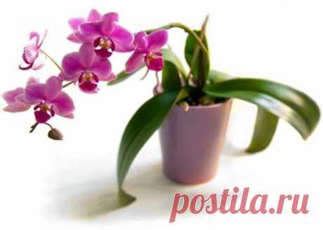 орхидеи Как реанимировать её после цветения