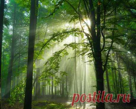Картинки германия, лес, schwarzwald, деревья, лучи света, природа - обои 1280x1024, картинка №355691