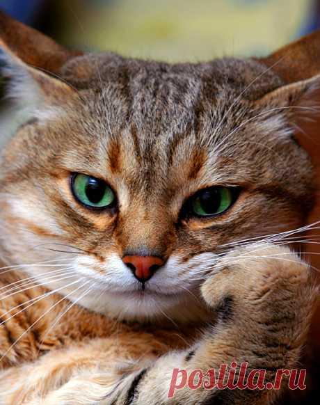 Истории о том, что животные могут очень сильно любить. Мы их явно недооцениваем