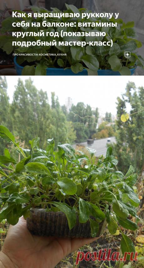 Как я выращиваю рукколу у себя на балконе: витамины круглый год (показываю подробный мастер-класс) | ПРО красивости: косметика, кухня | Яндекс Дзен