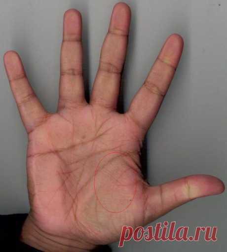 Линия ангела-хранителя на руке – мощная защита от бед | Экспресс-Новости