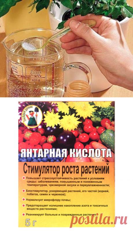 Янтарная кислота для комнатных растений - советы, рекомендации