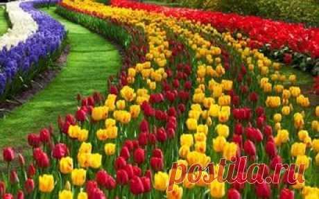 цветы: 23 тыс изображений найдено в Яндекс.Картинках