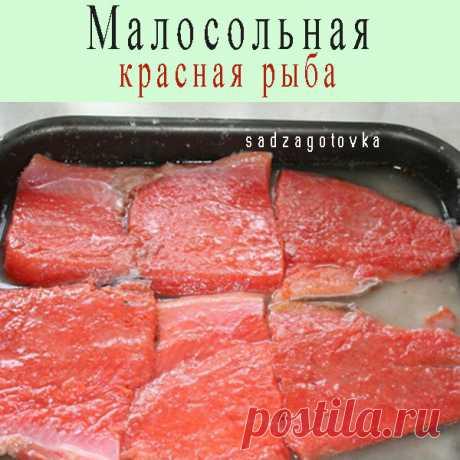 Малосольная красная рыба — Сад Заготовки