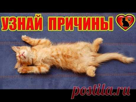 Почему кошки любят лежать и спать на спине?!