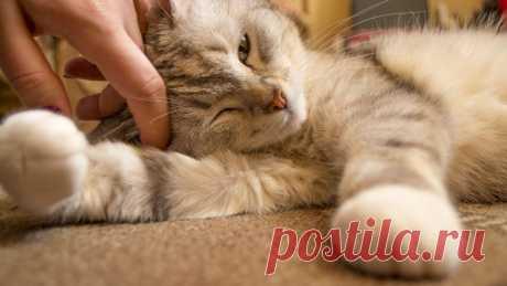Кошки оказались сильно привязаны к хозяевам - Новости Mail.ru