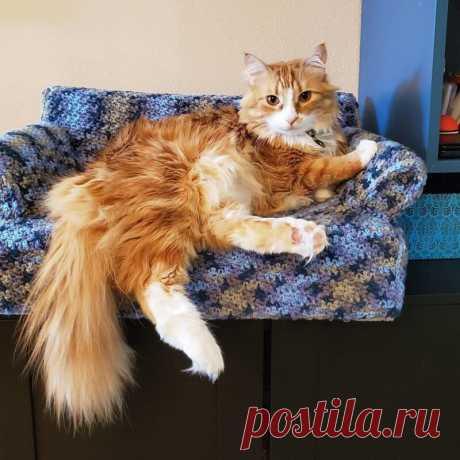 Среди любителей и любительниц вязания появилось новое увлечение- вязать диванчики и креслица для любимых котеек! По-моему , получается очень мило! И котейки довольны- у них теперь свои диваны!  (фото из открытых источников)