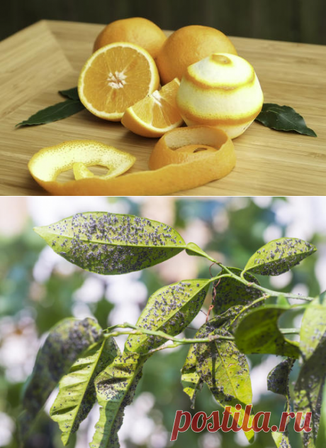 Не выкидывайте апельсиновые корки, они еще пригодятся. 15 вариантов применения