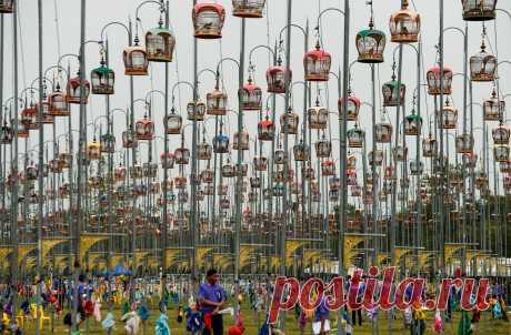 Птицы сидят в своих клетках во время ежегодного конкурса певчих птиц. Наратхиват, Таиланд. В конкурсе приняли участие более 1800 птиц из Таиланда, Малайзии и Сингапура. Конкурс певчих птиц очень популярен в Таиланде, так как тут запрещены азартные игры. Это возможность поболеть с азартом за своих питомцев и выиграть призы.