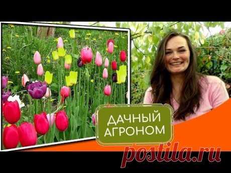 Тюльпаны: КАК ПОСАДИТЬ. Топ-5 советов от Дачного Агронома