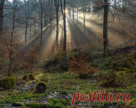 Картинки германия, лес, south-eifel, деревья, мох, лучи света, природа - обои 1280x1024, картинка №414192