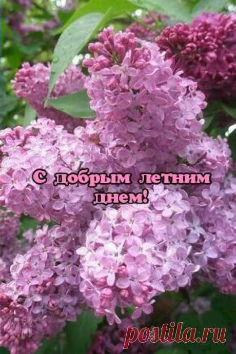 С добрым летним днем!