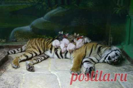 Невероятная дружба между животными / Питомцы