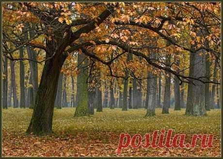Осінь у Дубовці.